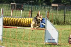 Tierkrankenversicherung Test