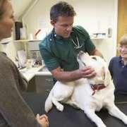 Tierkrankenversicherung Test 2014