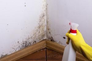 Reinigungsservices Test - Kalk und Schmutz