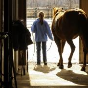 Pferdesteuer: Norddeutsche Gemeinde erhöht Kosten für Pferdehaltung